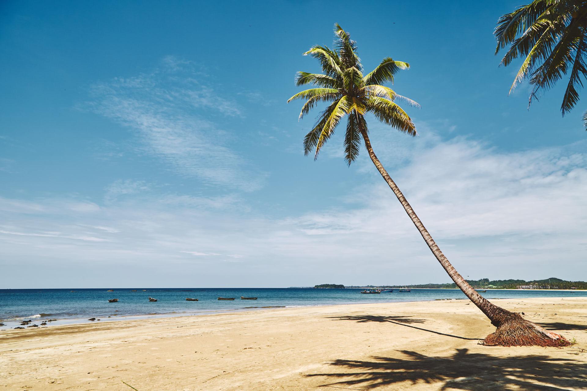 Magnifique palmier qui penche