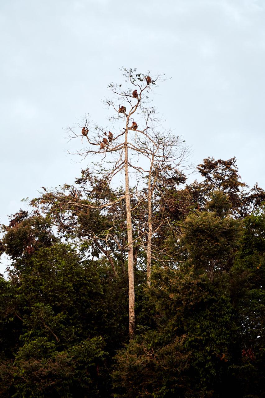 Des Singes dans un arbre
