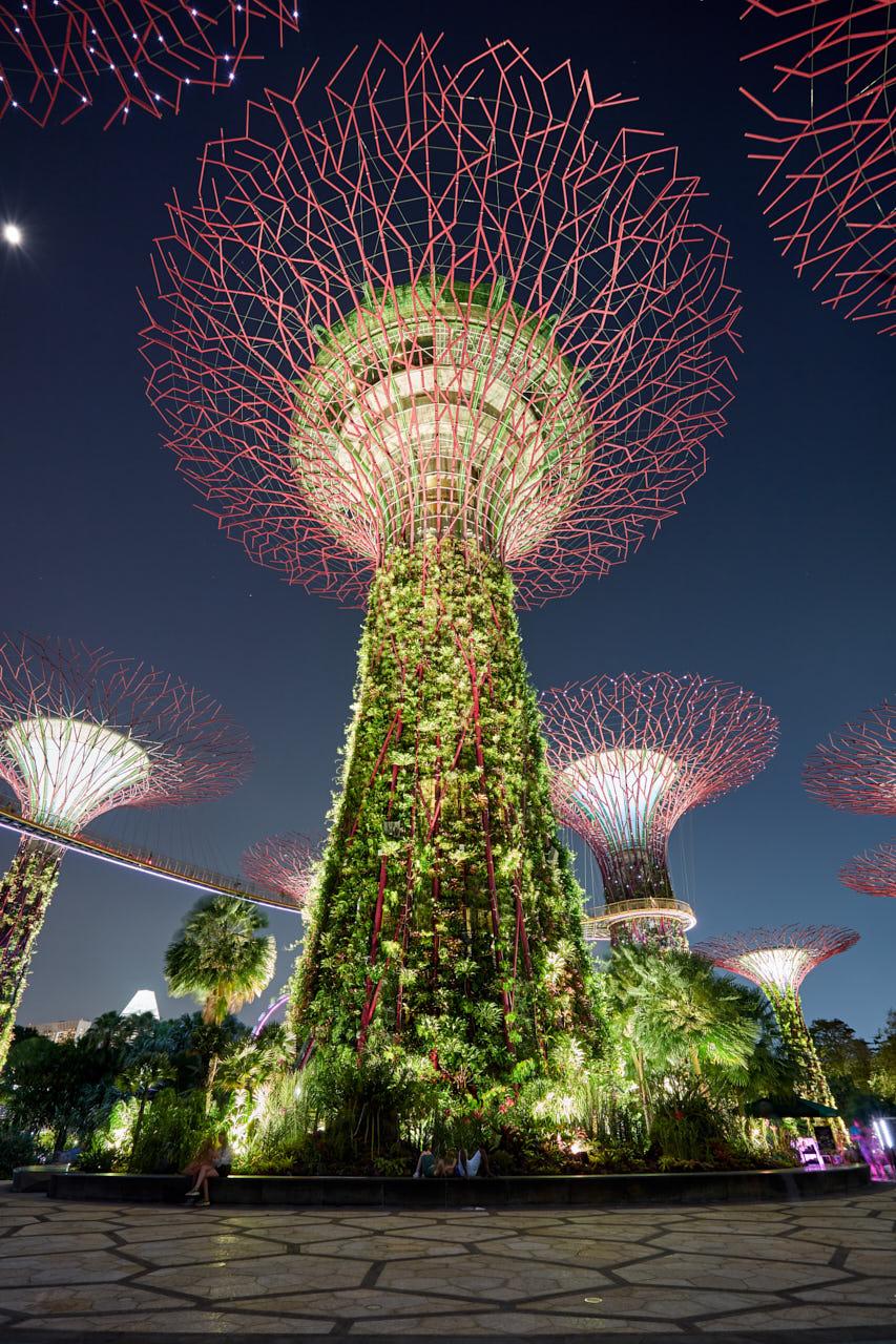 Un arbre de singapour