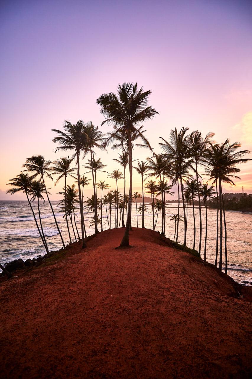 Des palmiers sur une butte