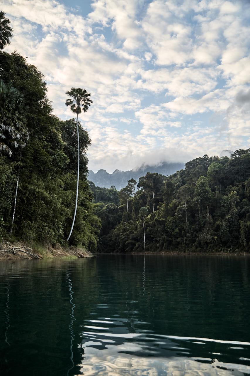 La jungle de Khao Sok