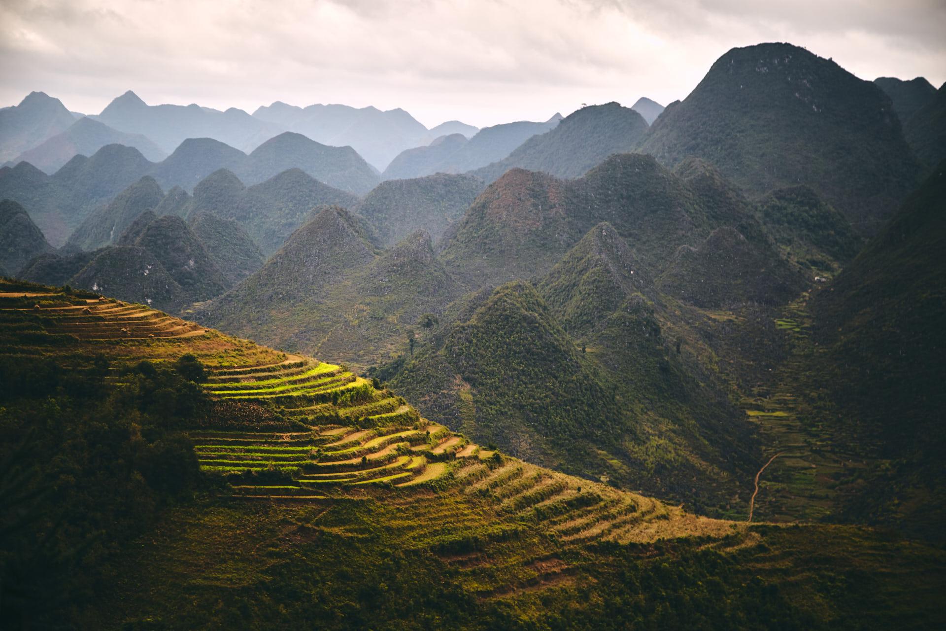 Des terrasses de Riz devant la montagne